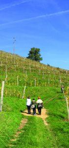 Vineyard in Slovenia
